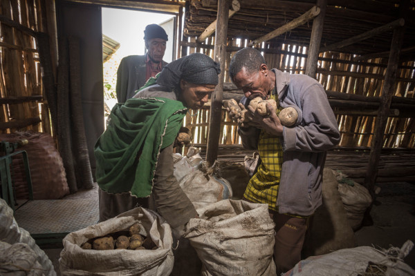 Ethiopia, Gelsha, around Kombolcha, South Wello, Wollo, August 14 2014 Potato storage in Gelsha, near Kombolsha, Wollo. Potatoes are new to the menu of many Ethiopians as most of them are used to eat the traditional Enjerra. Potatoes consumption will add to the nutrition of Ethiopians. Wollo is known for the famine in 1984, when close to a million people died during a food crisis.Photo: Petterik Wiggers/Panos Pictures